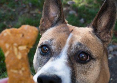Sweet Potato and Apple Dog Treats